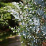 花粉症や風邪、新型コロナウィルス対策にオススメのアロマスプレー